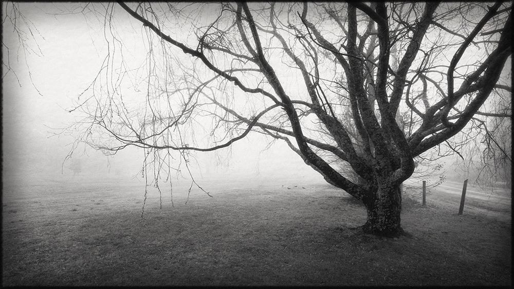 Tracy Ponich: <em>Forecast Mist 1</em>, photographic print on 100% cotton fibre fine art paper.
