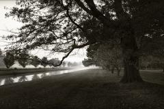 Tracy Ponich. Mist, Retford Park, photograph on handmade paper (Washi).